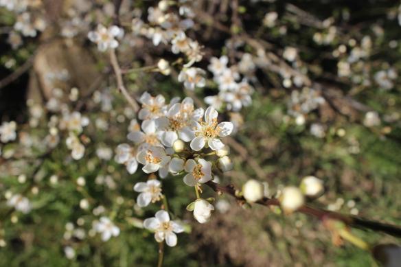 Blossoms in focus