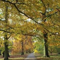 Kew Gardens – Autumn visit 2