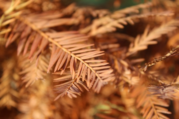 orange pine needles