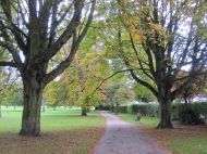 Path and trees