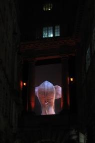 Elephantastic - back