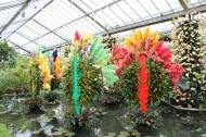 Brazilian display