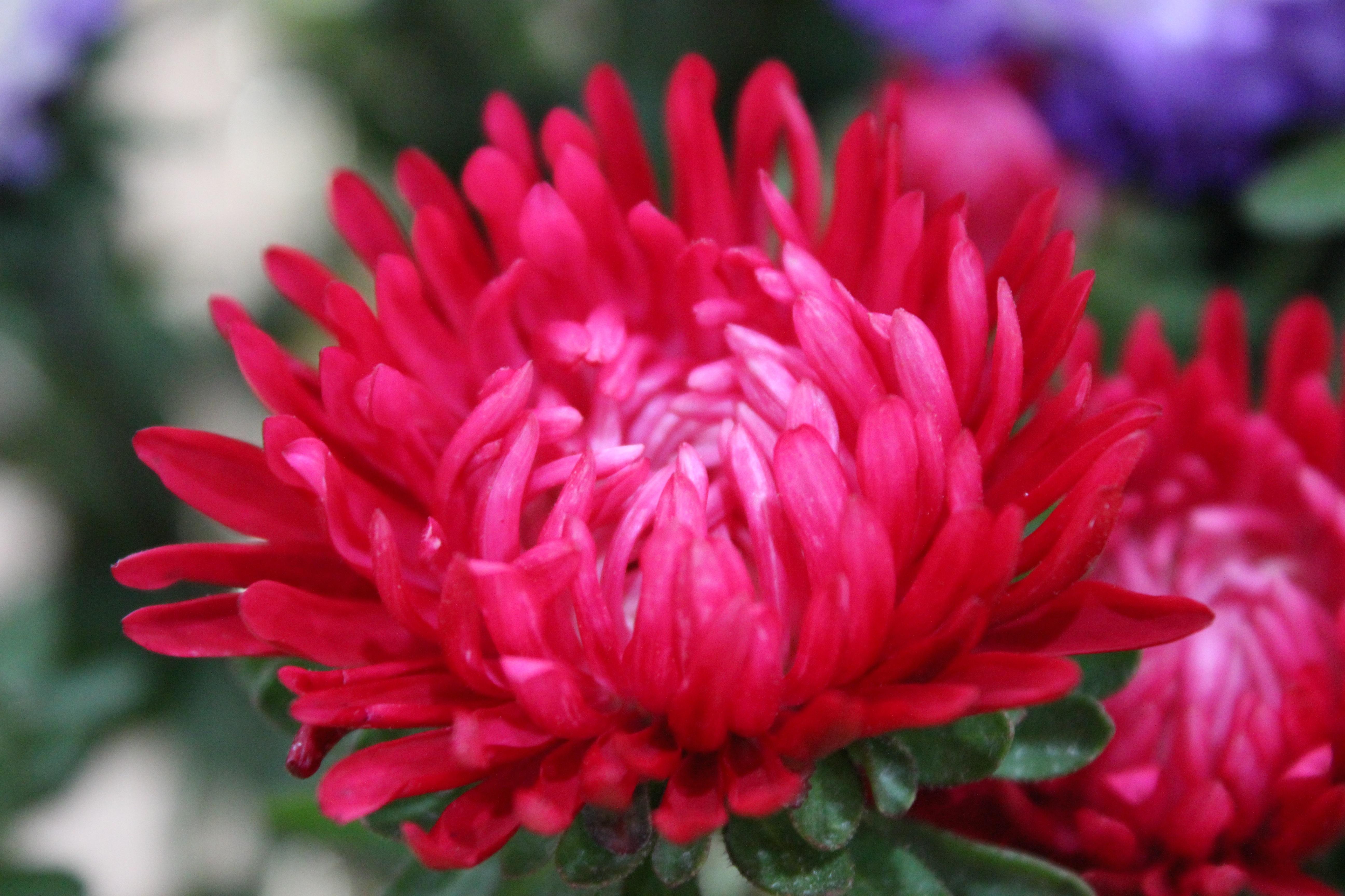 Pink outreach everyphototunity pink flower mightylinksfo