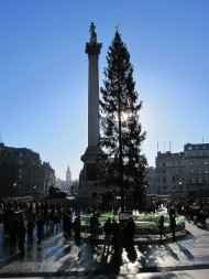 Tree and Nelson Column