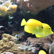 Yello fish