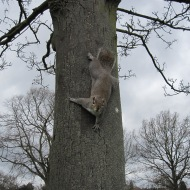 Squirrel