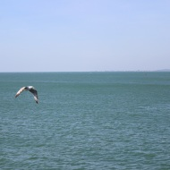 Seagull and sea