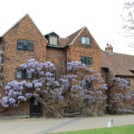 Buidling with wisteria flowers