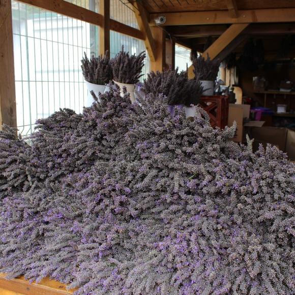 Lavender pile