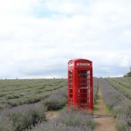 Phone box in fields