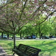 Blossom tree and bench