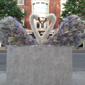 Flowers swans