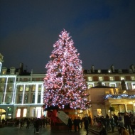Giant tree, Covent Garden