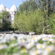 Sussex Place and daisies
