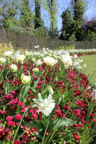 Tulip flower display
