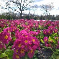 Springtime Park Visit