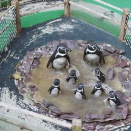 Model penguins