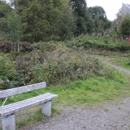 Bench near viewing tower