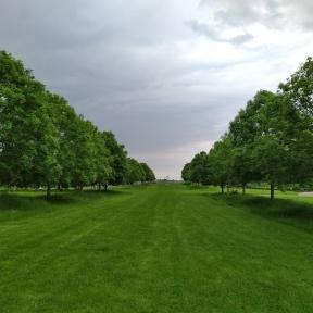 Treelined walkway