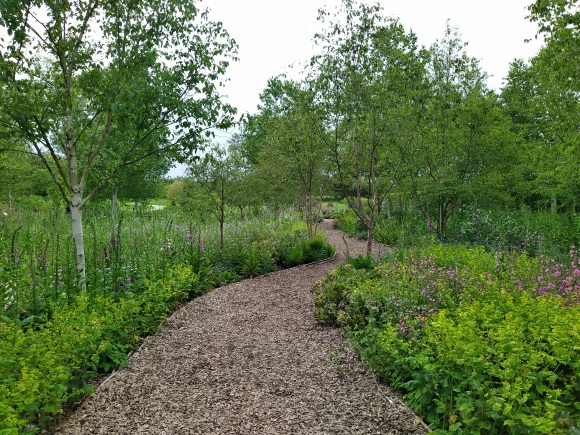 Pathway lined with foxgloves